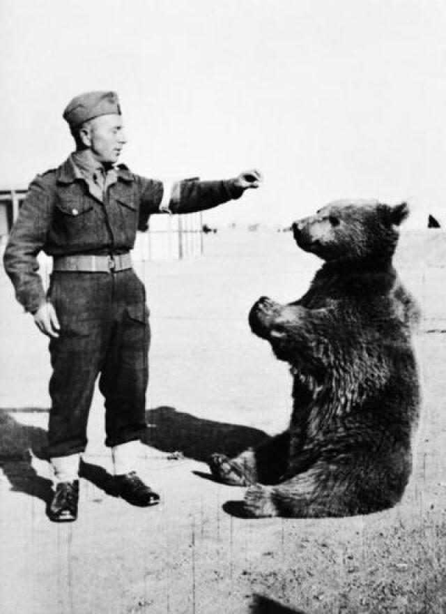 Niedźwiedź Wojtek stanie przed katedrą?