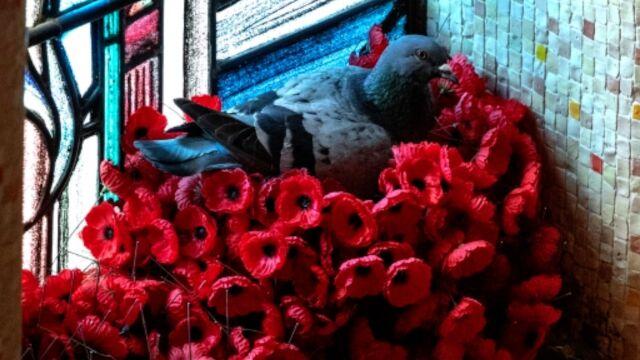 Porwał kwiaty z pomnika  i zbudował gniazdo w muzeum