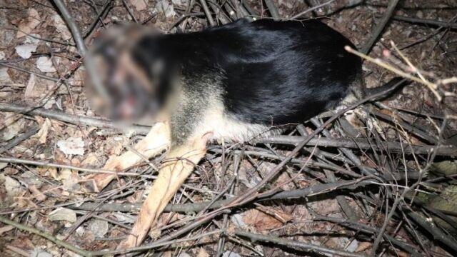 Zabił psa młotkiem. Tłumaczył, że zwierzę niszczyło mu meble w domu