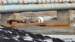 Przeszedł 1500 kilometrów. Wygłodzony niedźwiedź polarny w Norylsku