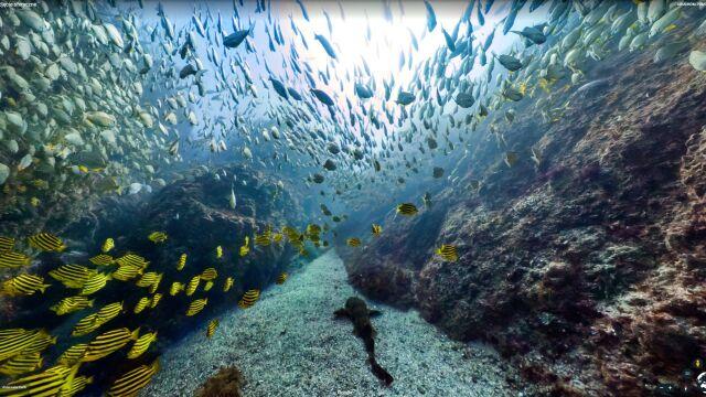 Wirtualny spacer po dnie oceanu