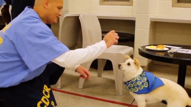 Psy ze schroniska resocjalizują więźniów