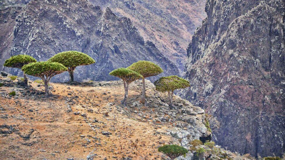 Wojsko w raju. Żołnierze z Emiratów na wyspie smoczych drzew