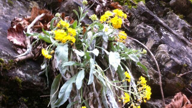 A może to już wiosna?  W górach kwitną majowe rośliny