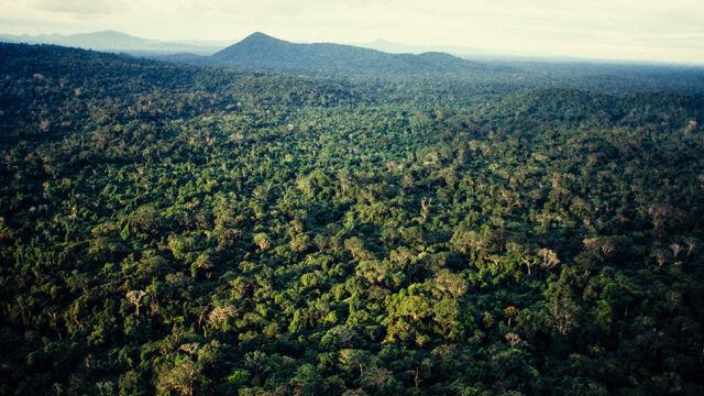Bolsonaro o danych o wylesianiu Amazonii: zła reklama przeciwko Brazylii