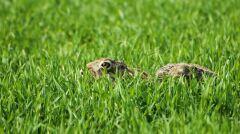 Dzięki działaniom Patryka Snowidowo jest co raz bardziej przyjazne dla różnych gatunków zwierząt