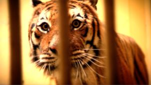 Problemy poznańskiego zoo. Jak wygląda walka o dzikie zwierzęta