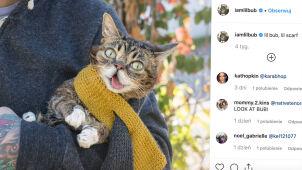 Była chora i uwielbiana przez internautów. Nie żyje jedna z najsłynniejszych kotek