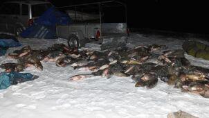 Wiózł 220 nielegalnie złowionych ryb. Policja: nie działał sam