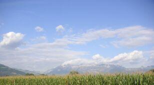 """UE odrzuca wyniki badań o szkodliwości GMO. """"Braki w metodologii"""""""