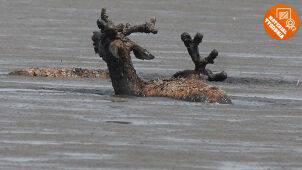 Piorunująca przewaga. Akcja ratowania jeleni materiałem tygodnia