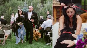 Druhna pomogła umierającemu psu panny młodej.