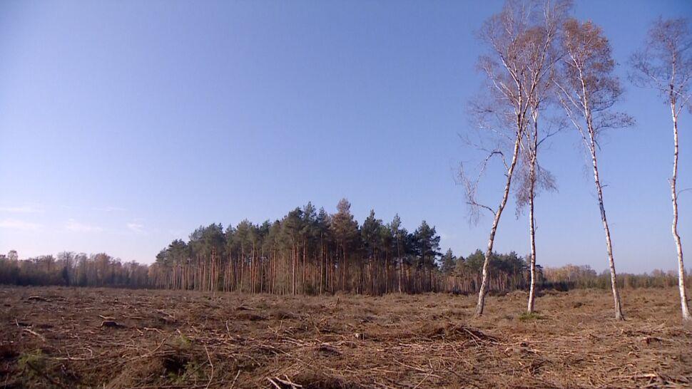 160 hektarów lasu do wycinki. Przez korniki