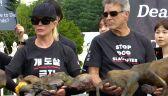 Kim Basinger protestowała w Seulu przeciwko jedzeniu psiego mięsa