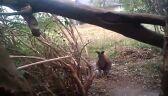 """""""Nagle zobaczyłem, jak koło przystanku skacze kangur"""""""