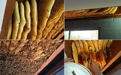 """""""Zadzwoniła i powiedziała: mam pszczoły pod sufitem"""""""