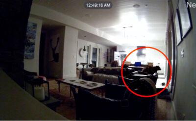 Otworzył lodówkę i zwiedził mieszkanie. Niedźwiedź szukający przekąski