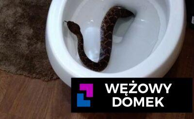 Wężowy domek