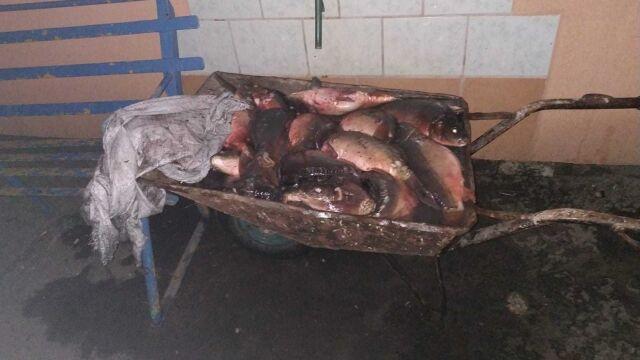 Miał ukraść z hodowli 60 kilogramów żywych ryb. Trzymał je w taczce i bez wody