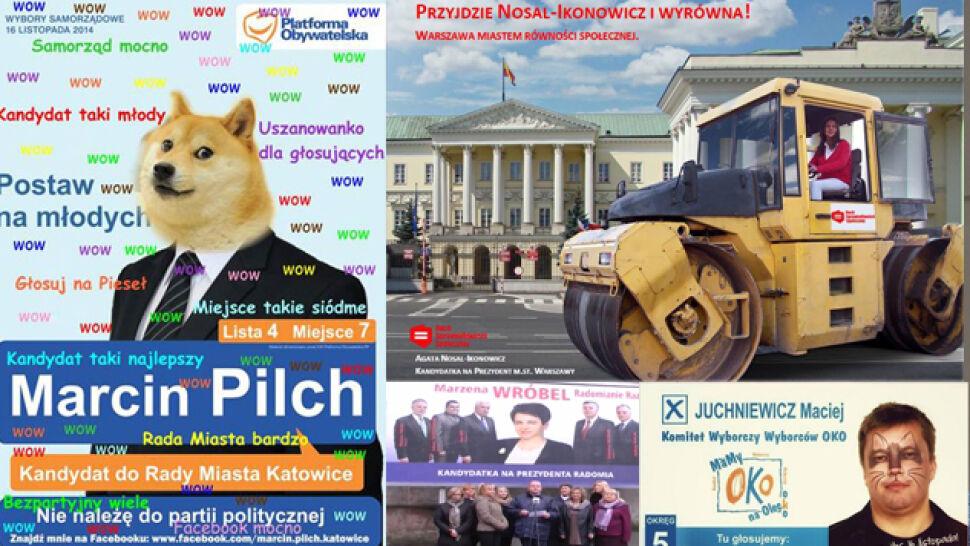 Jak pies z kotem zostali kandydatami i dlaczego piskaczki zzielenieją? Perły kampanii