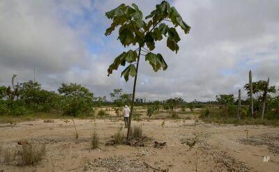 Mieszkańcy Peru walczą o wycięty kawałek puszczy. Sadzą nowe drzewa