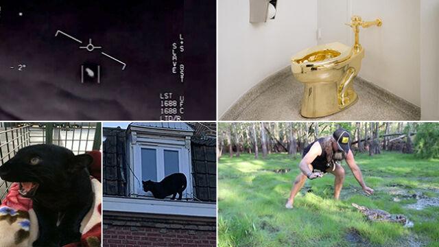 Kradzież sedesu, puma na dachu czy szukanie pytonów? Wybierz wideo tygodnia w tvn24.pl