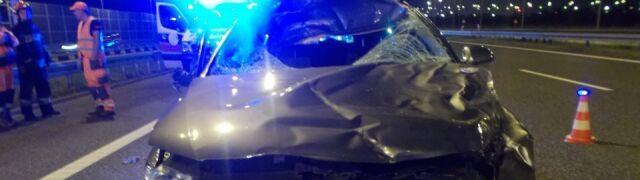 Zderzenie z jeleniem na autostradzie. Zginął policjant z drogówki