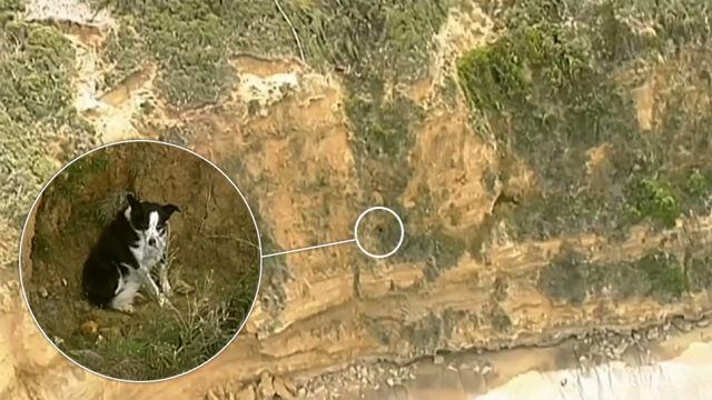 Pies utknął na klifie. Akcja ratunkowa