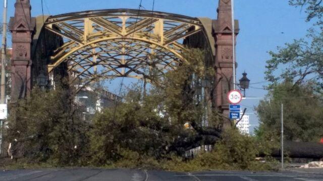Drzewo runęło na jezdnię przed mostem. Pięć aut zniszczonych, ruch zablokowany