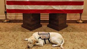 Pies czuwa przy trumnie prezydenta Busha