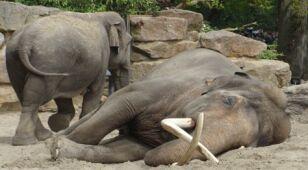 Kryzys zagląda do klatek w zoo