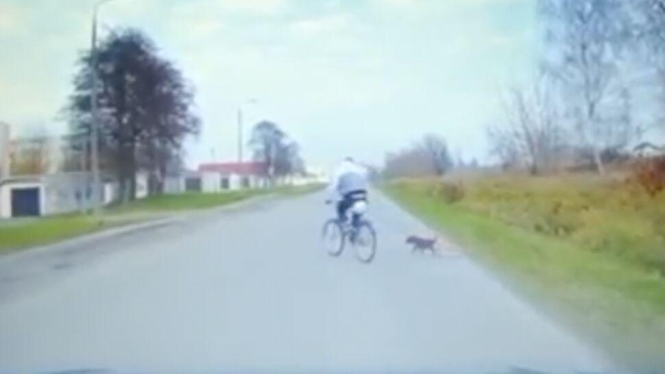 """Rowerzysta jechał """"wężykiem"""". Obok na smyczy biegł pies"""
