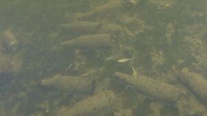 Jezioro pełne śmieci. Płetwonurek nagrał, co zalega na dnie
