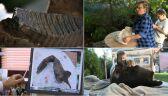 Niezwykłe znalezisko na Dolnym Śląsku. Żuchwa mamuta może mieć nawet 20 tysięcy lat!