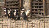 Dyrekcja zoo bardzo cieszy się z niezwykłych narodzin