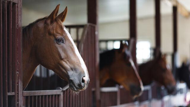Wypadek na obozie jeździeckim. Spłoszone konie stratowały 10-latkę