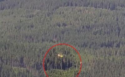 Paralotniarka utknęła na drzewie. Pomogli ratownicy GOPR