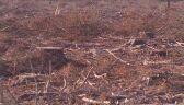 160 hektarów lasu do wycinki. Wszystko przez korniki