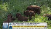 Osiem szczeniaków uratowanych z nagrzanego bagażnika