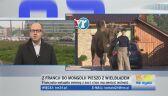 Francuzka wykupiła zwierzę z zoo