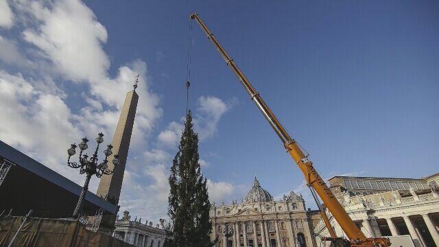 Na placu Świętego Piotra stanęła choinka