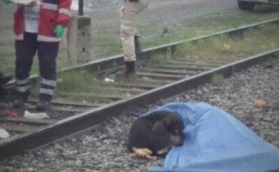 Pies czuwał przy ciele zmarłego właściciela