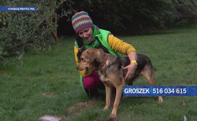 Groszek szuka domu