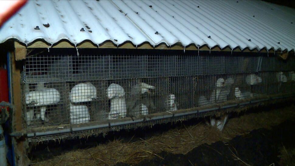 Lewica z PiS, Konfederacja z PSL. W sprawie ochrony zwierząt powstają nietypowe koalicje