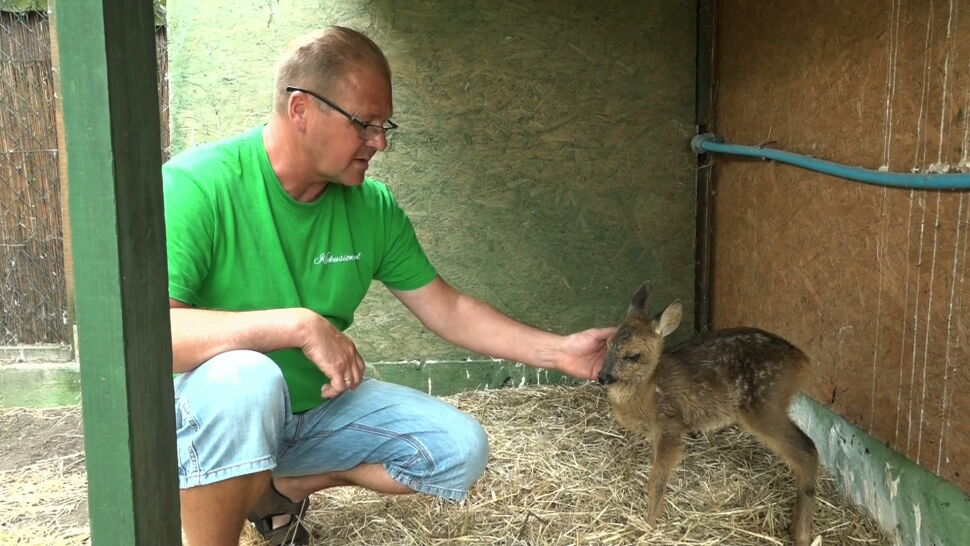 Pięć lat temu uratował bociana. Teraz prowadzi niezwykły ośrodek dla dzikich zwierząt