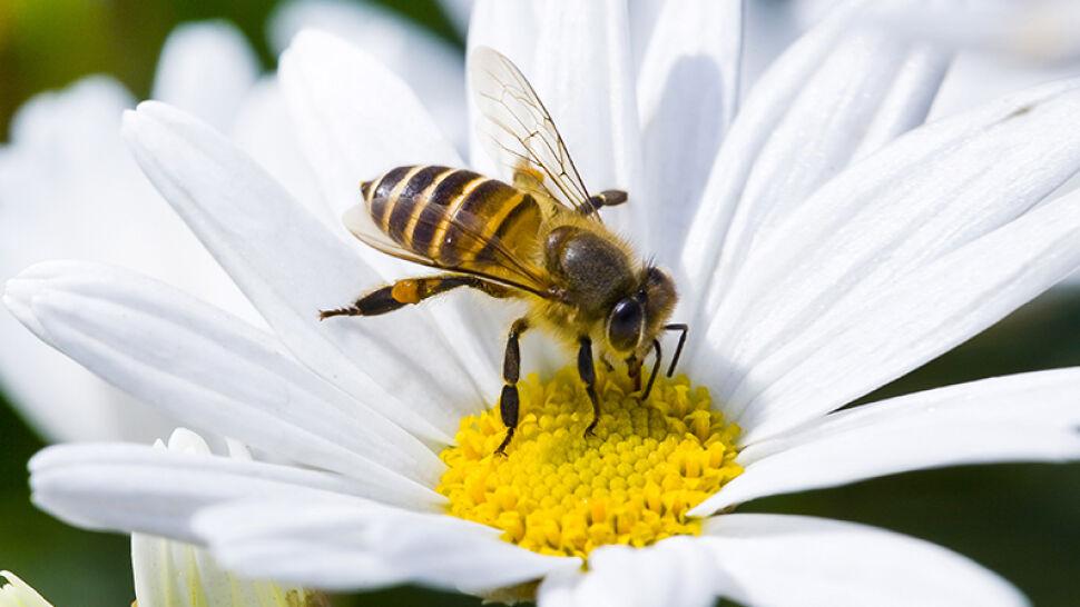 Nazwa zabawna, ale problem poważny. Wielki Dzień Pszczoły