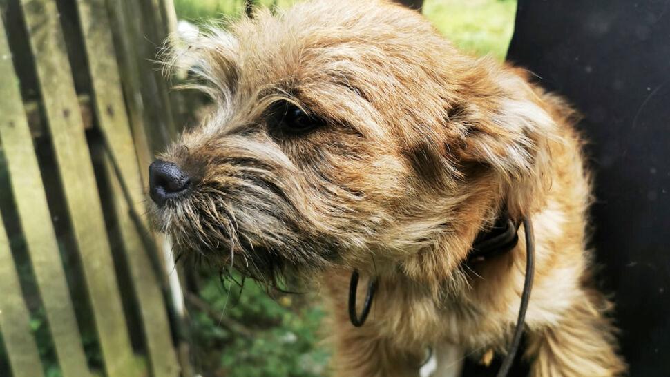 Pies czuwał przez trzy dni przy 78-latku, który zasłabł w polu w Jamnicach