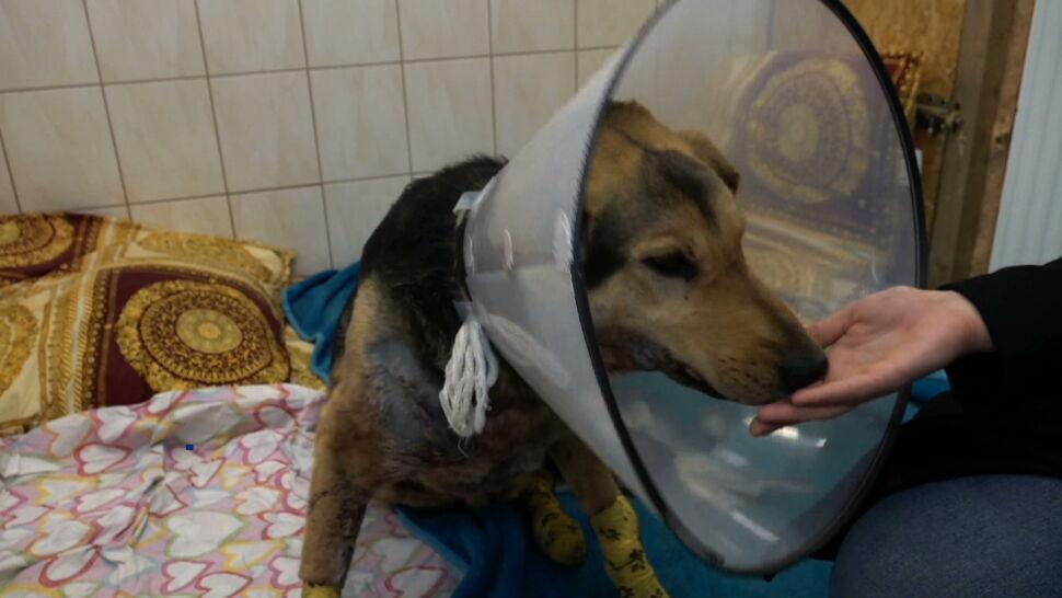 Sołtyska wsi Wirki przywiązała psa do haka i ciągnęła zwierzę po asfalcie