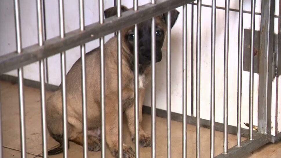 """""""Okno życia"""" dla psów i kotów, czyli pionierski pomysł na walkę z bezdomnością wśród czworonogów"""