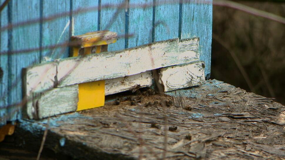 Nieznany sprawca wlał do uli olej napędowy. Zginęło tysiące pszczół